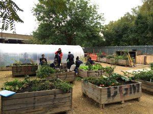 food-growing